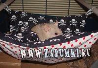 Пиратский домик для морской свинки или мышки