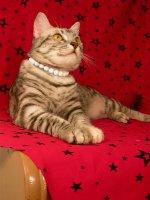 Ошейник-бусы для кошки