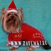 Модный пес. Одежда для маленький собачек.