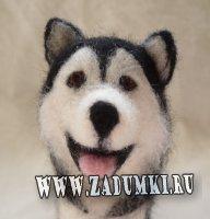 Собака благородной породы маламут
