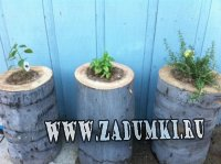 Пни для растений