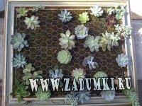 Суккулентный сад на стене