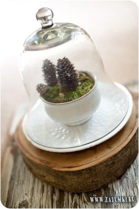Зимний террариум - природа в вашем доме
